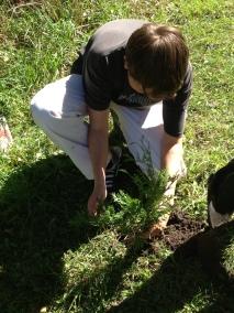 Tree Plant 2013